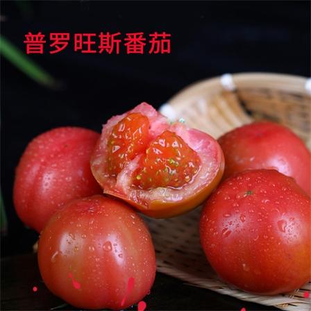 普罗旺斯番茄3斤大果8个左右,5斤大果16个左右,9斤大果26个左右