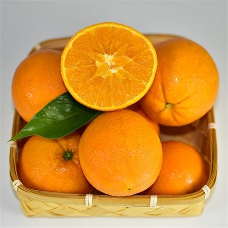"""橙子中的""""爱马仕""""—伦晚脐橙,春季独有,现摘现发5斤大果&9斤大果包邮"""