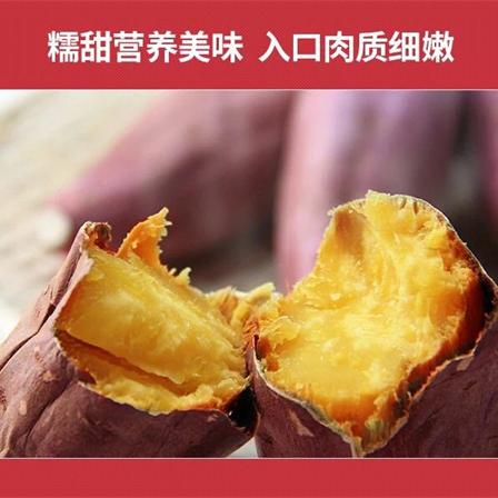 广西巴马红蜜薯5斤装新鲜采挖包邮